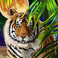 Second In The Big Cat Series - Tiger by Thomas J Herring