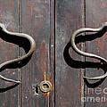 Serpent by Lauren Leigh Hunter Fine Art Photography