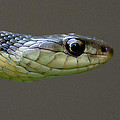 Serpent Profile by WB Johnston