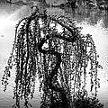 Serpentine by Kelly Dreller