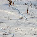 Serpentine Searcher by Jim Garrison