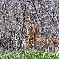 Sertoma Park Deer by M Dale