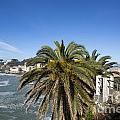 Sestri Levante And Palm Tree by Mats Silvan