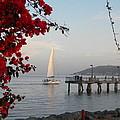Set Sail  by Eric Johansen