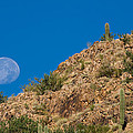 Setting Moon by Randall Ingalls