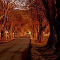 Setting Sun On Country Road by Frank Selvage