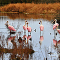 Seven Spoonbills by Al Powell Photography USA