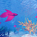 Several Red Betta Fish Swimming by Elena Duvernay