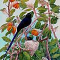 Seychelles Paradise Flycatcher by Janet Summers-Tembeli