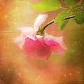 Shabby Chic Rose Print by Theresa Tahara