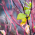Shades Of Autumn - Reds And Greens by Alexander Senin