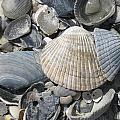 Shades Of Blue Shells by Ellen Meakin