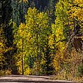 Shades Of Fall by Ernie Echols