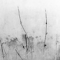 Shades Of Grey by Prakash Ghai