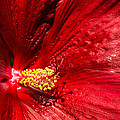 Shades Of Red by Georgia Mizuleva