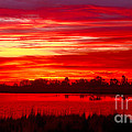 Shades Of Red by Robert Bales