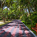 Shadow Alley In Sun Island Resort. Maldives  by Jenny Rainbow