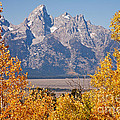 Shadow Mountain Grand Teton National Park by Fred Stearns