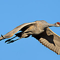 Shadow On His Wing by Lonnie Wooten