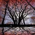 Shadow Secrets by Bob Orsillo