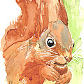 Shadow Tail Red Squirrel by Karen  Loughridge KLArt
