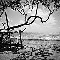 Shadow Tree Cas En Bas by Ferry Zievinger