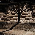 Shadow Tree by Karen Adams