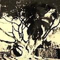 Shadow Tree by Rob Hans