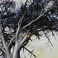 Shadows 1 by Andrada Anghel