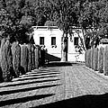 Shadows At Clos Pegase Winery by Dominic Piperata