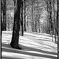 Shadows At Mccauley Mountain by David Patterson