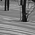 Shadows In Boyertown Park by Trish Tritz