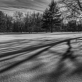 Shadows In The Park by Bill Wakeley
