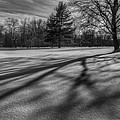 Shadows In The Park Square by Bill Wakeley