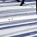 Shadows Lines On Snow In Park by Konstantin Sutyagin