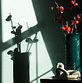 Shadows Of Fall by Diana Weir