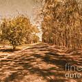 Shadows On Autumn Lane by Jorgo Photography - Wall Art Gallery