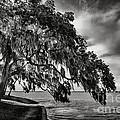 Shady Oak by Marvin Spates