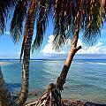Shady Palm Beach by Patrick Witz