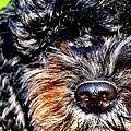 Shaggy Black Dog by Marysue Ryan