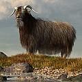 Shaggy Goat by Daniel Eskridge
