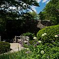 Shakespeares Garden Central Park by Amy Cicconi