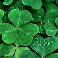 Shamrock Green by Patricia Strand