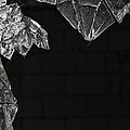 Shards by Margie Hurwich