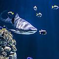 Shark Hunting by Jaroslaw Grudzinski
