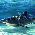 Shark In Depth by Laurie Snow Hein