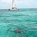 Shark N Sail I by Kristina Deane