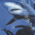 Sharkbait by Denny Bond