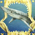 Sharks Truth... by Will Bullas