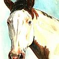 Shawnee by Linda L Martin